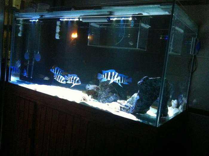 海水缸设计图展示