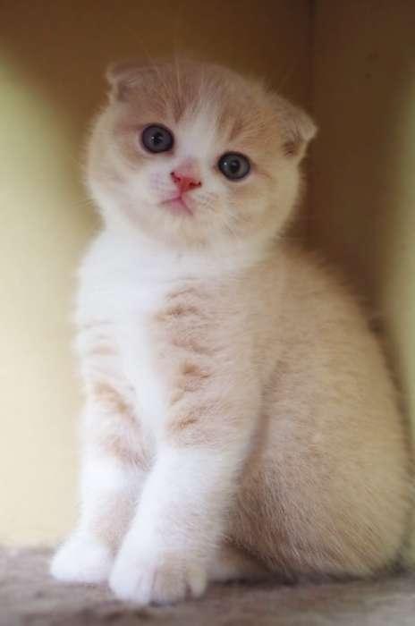很可爱品相好可上门看猫