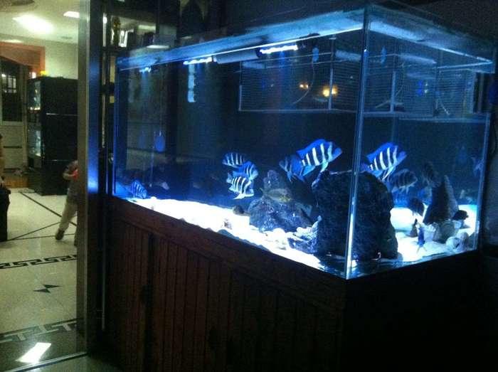 龙鱼组缸尺寸设计图