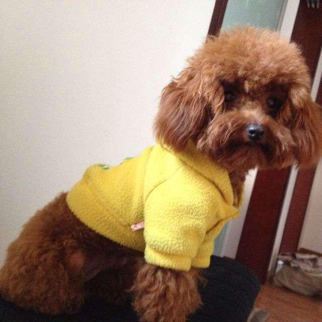 您可以:查看最新宠物狗信息>>发布一条泰迪熊求购信息>&gt