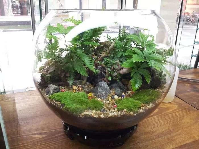 苔藓手工创意产品,室内植物墙项目培训
