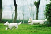宠物春季旅游