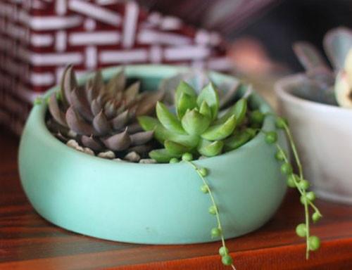 苔藓微景观为您准备了苔藓