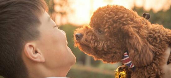 记录阳光下温情的一幕——人类最好的朋友