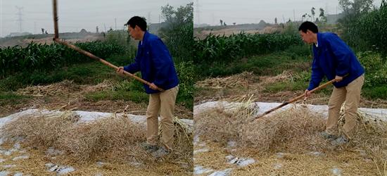 勤劳朴实的农村哥,像我这样年轻的农村人,没几个会打油菜
