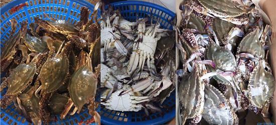 美味梭子蟹,刚从舟山回来,带了20斤个个都是半斤以上!