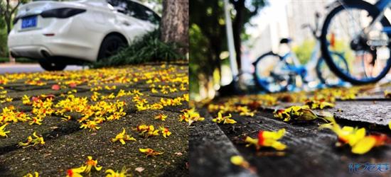 常州街头——初秋,一场秋雨一场寒,白露秋分夜,一夜冷一夜