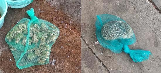 星港花苑农贸市场大门口公然售卖青蛙,刺猬,有人管吗?