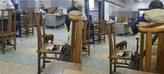 素质堪忧!顾客将狗带入早餐店,还没有狗绳,是怎么想的?