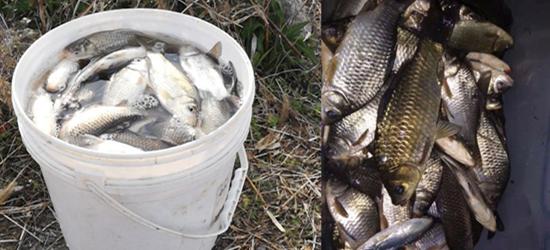 钱资荡的鱼算是野鱼卜,钓到了一大桶鱼,可以加餐了