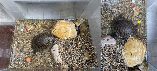 钓鱼意外收获一只乌龟,养过乌龟的朋友知道它现在吃什么?