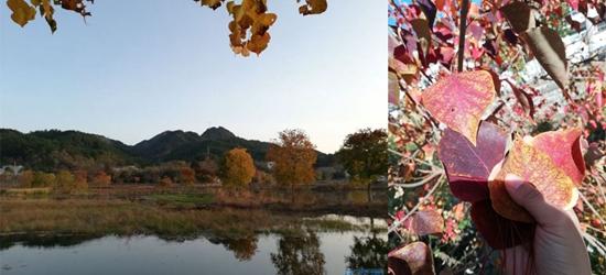 深秋与乌桕撞满怀,深秋素来是我挚爱的季节,色彩斑斓