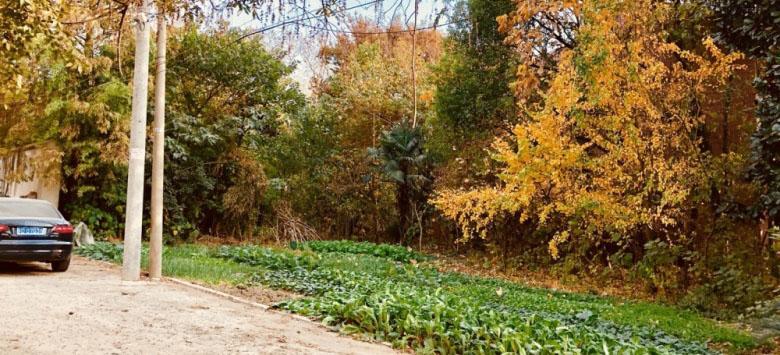 农村老家门口菜园一片秋意,原来这么美