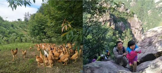 皖浙天路的鸡不简单,飞上枝头成凤凰!山清水秀,鸟语花香