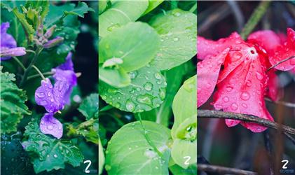来看看我们小区里的雨后春色:拍得娇色欲滴啦