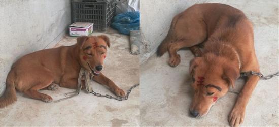 快来看看我家的中华田园犬!买了两支记号笔,给狗子化了个妆