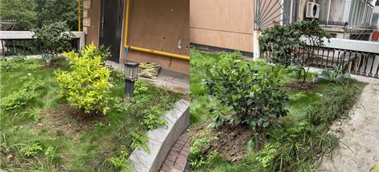 荷花池的公共绿地,如何成了私人后花园!