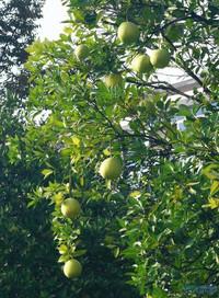 http://image.haojiaolian.com/2012-11/xueche/1353548503248.jpg_AcronisTrueImage20127133AcronisDis