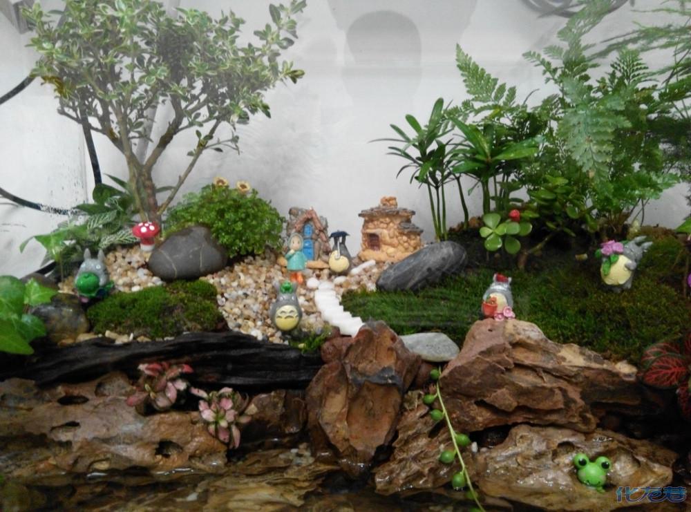 最新成果:绿植与养鱼结合--水陆缸.新型水缸造景,养鱼观景两不误!