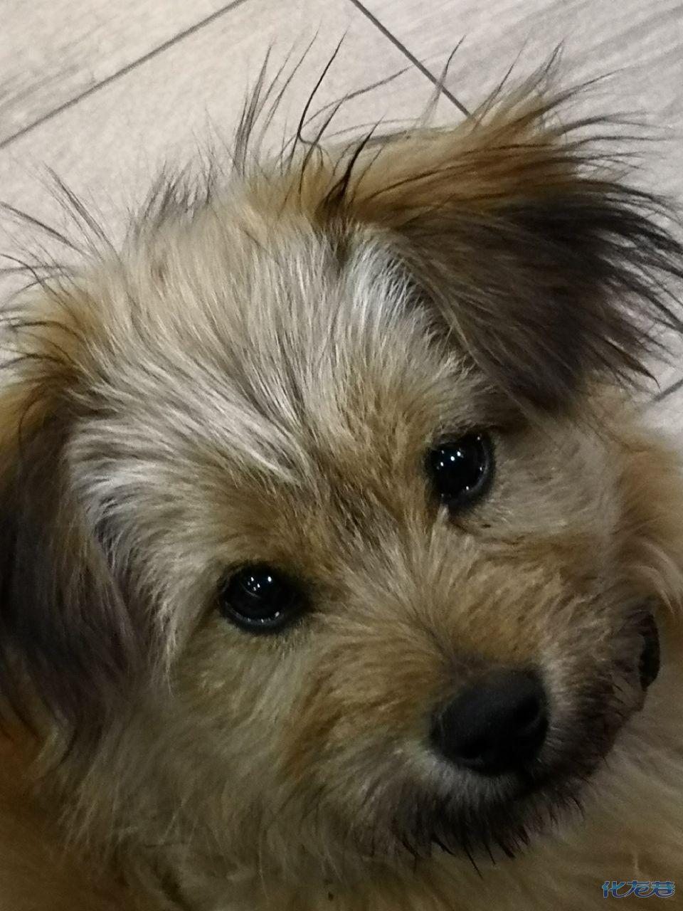小灰灰是学校附近的流浪狗狗,三个月大,很可爱