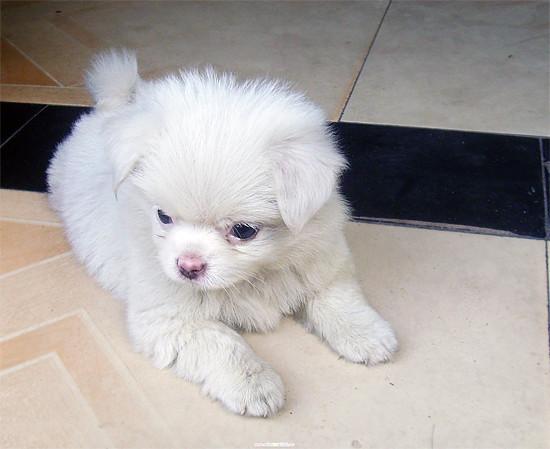 一只可爱的小小狗