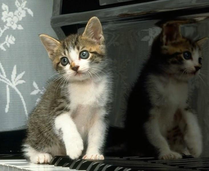 壁纸 动物 猫 猫咪 小猫 桌面 732_600