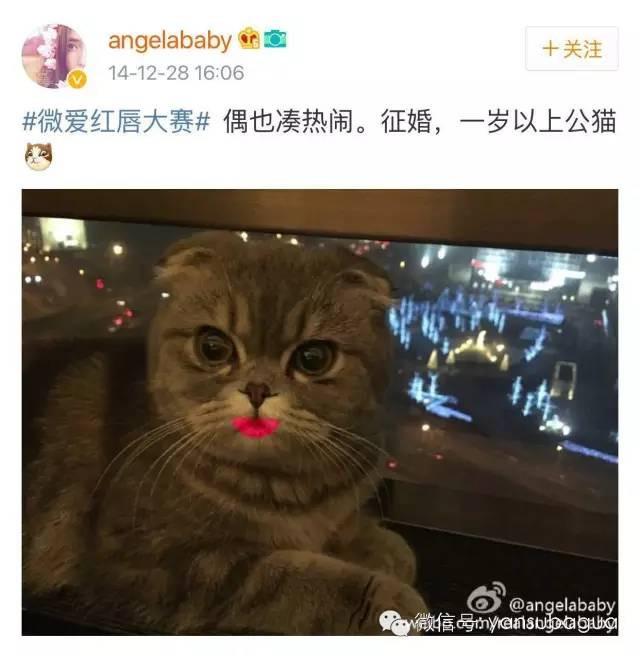 明节带着温柔晒刚出生的小猫.-Angelababy养猫不结扎被骂了 黄磊图片