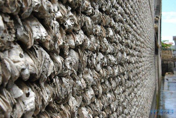 蚝壳古墙600年无损