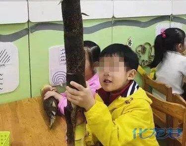 逆天竹笋带去幼儿园