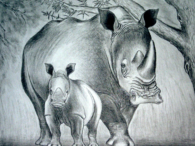 断云刀的相册 - 我的硬笔绘画 - 大犀牛