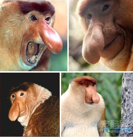 世界上最最丑陋的动物!