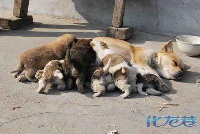 缅甸36种动物字花规矩