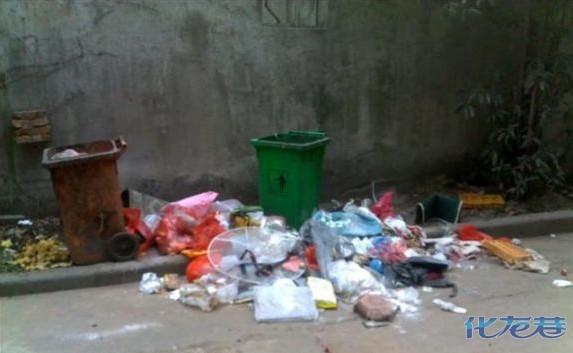 透过窗猛然发现楼下的两个垃圾桶被打劫了!