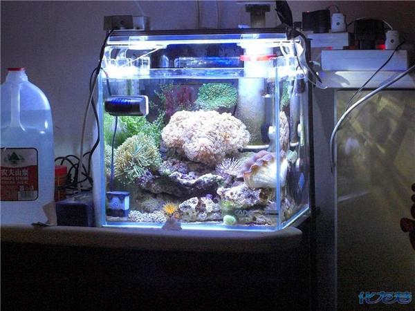 新手35cm的海水缸