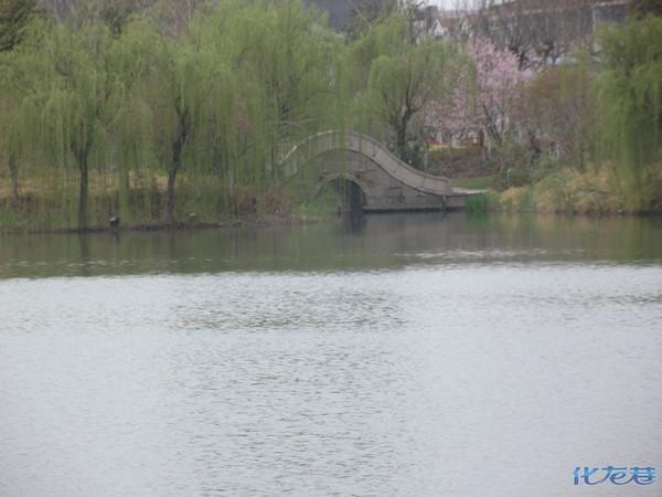 圩墩风景:春色满园,湖畔杨柳,石径小路