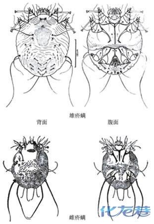 变形虫手绘结构图