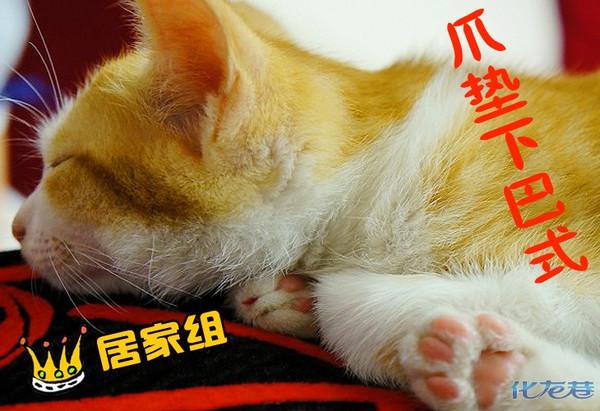 睡姿大比拼之猫猫篇:偷看猫咪睡觉的乐趣