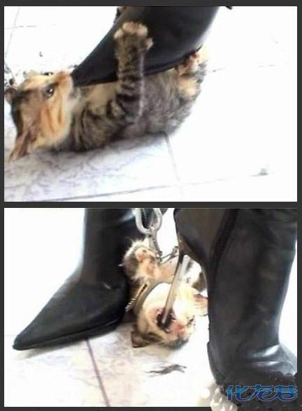 美女高跟鞋踩死小猫,很血腥,简直不是人