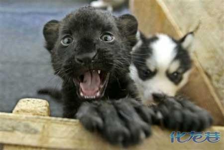十大最可爱的动物宝宝,香油们来看看萌不萌?