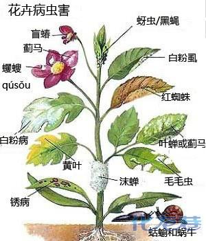 还有果树的病虫害图谱