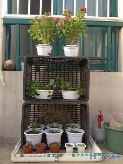 我的~花架~:虽然有点简陋,可是是废物利用,很环保,有木有?