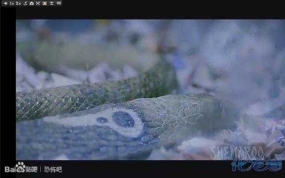 欲蛇美女蛇国�_今日图解《欲蛇》又名美女蛇,低调进行中.小伙伴们