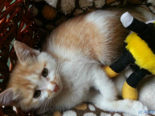 两只小黄猫,一只小黑猫免费赠养