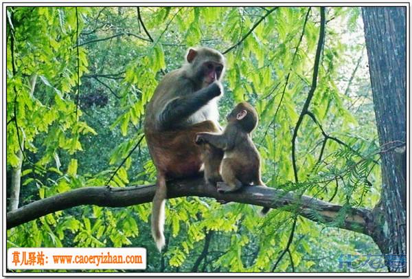 动物世界的母爱,最单纯最原始的表达方式
