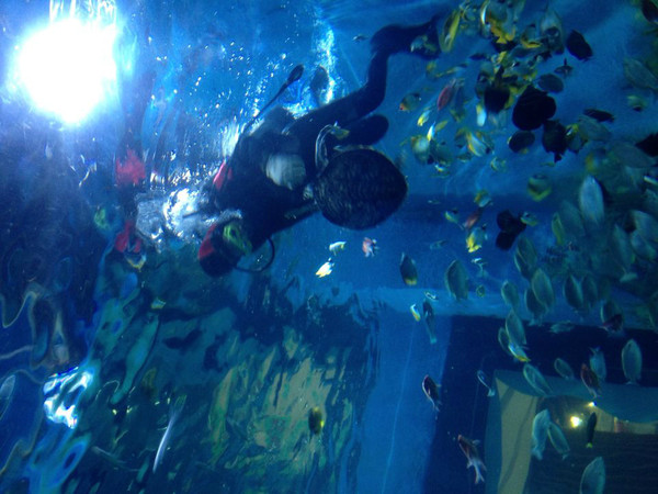 温州海底世界门票价格-温州海洋馆门票多少钱_温州_.