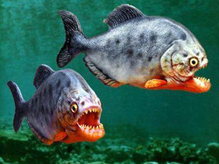盘点地球上10大最可怕的淡水动物