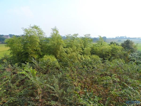 水稻田适合种植什么果树