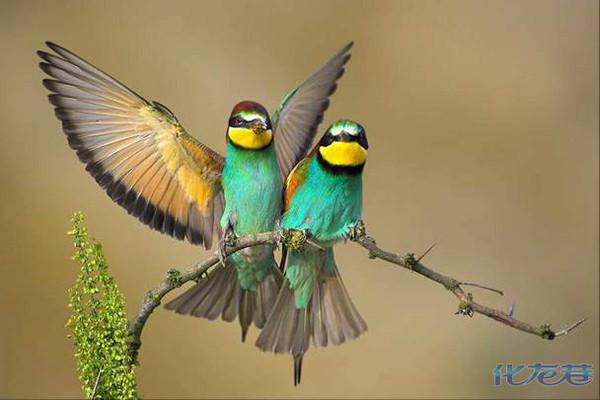 春天来了,到大自然中去听鸟叫,这种景象实在是美不胜收!