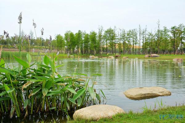 滆湖公园,武进最大的生态,低碳,湿地公园.适宜四季旅游,很不错哦