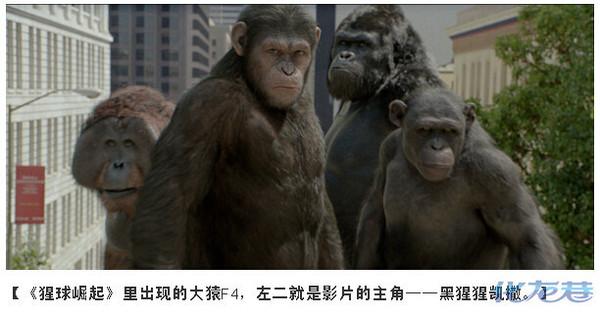 说到现存与人类血缘关系最接近的高级灵长类动物,看来争议比较大,网友的回答也是五花八门,有回答猴子的、有回答大猩猩的、还有回答长臂猿的、还有回答类人猿的。真实的答案只有一个。 首先给大家看一张图:(转载自果壳网)  看到了吧!和人类最接近的分支就是黑猩猩啦! 类人猿的答案太笼统了!